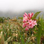 豊富な草花も魅力