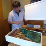親戚の漁師から送られて来た新鮮なスケソウダラ