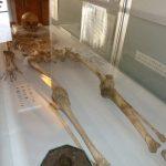 発掘された女性の人骨