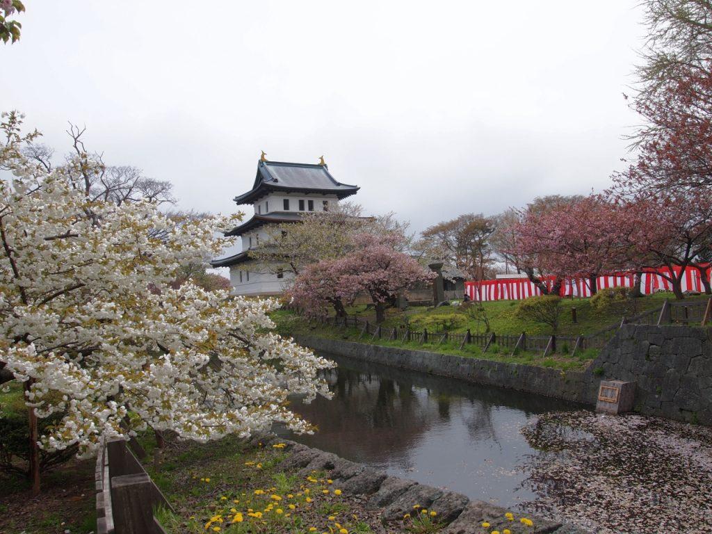 期間中は公園全体が桜に覆われる