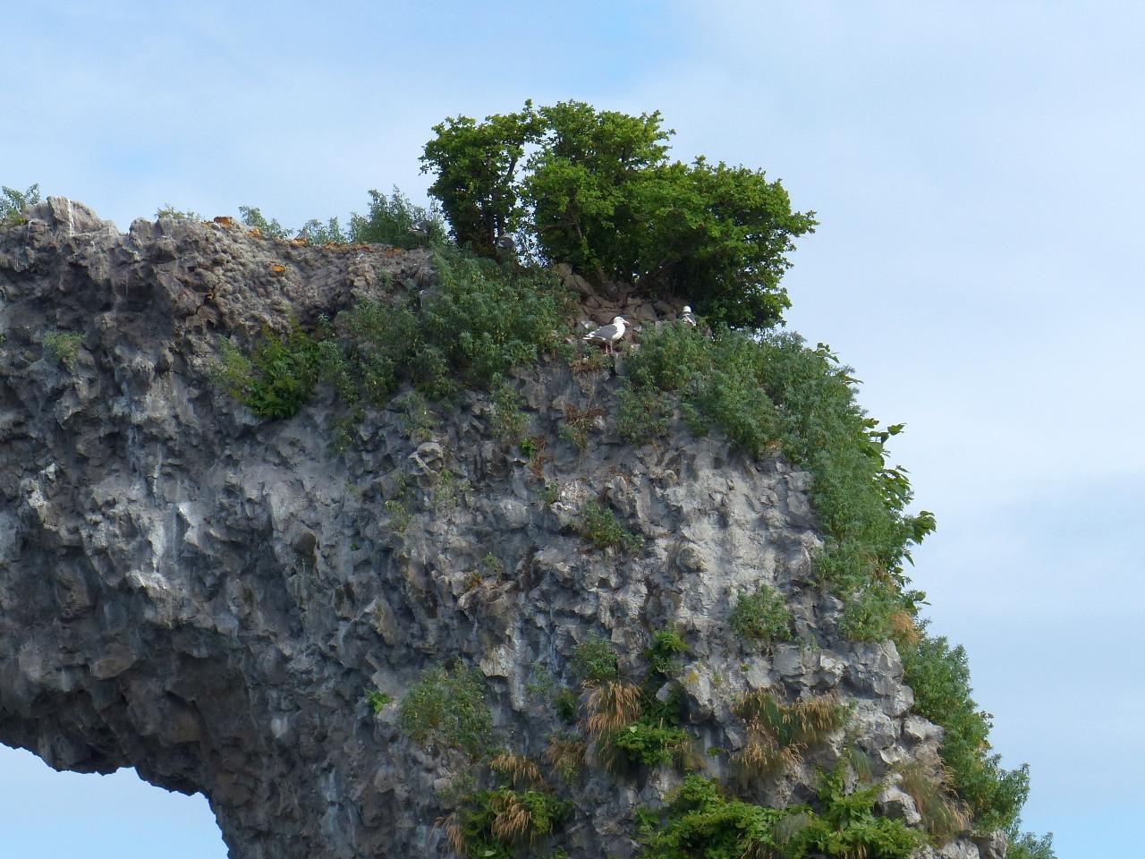 岩の頂点に生えている珍しい木