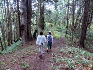 ヒバとブナの深い森を歩く