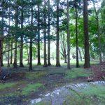 清涼な林の中に位置する